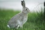 Мех кролика